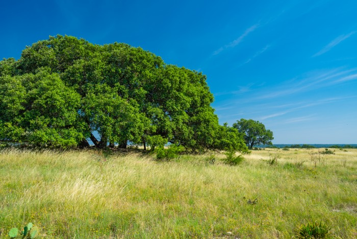 Texas Ranches for Sale | Selling Quality Ranches Throughout